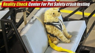 Reality Check: Center For Pet Safety crash testing